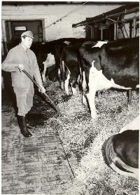 Milchkühe mit Bauer