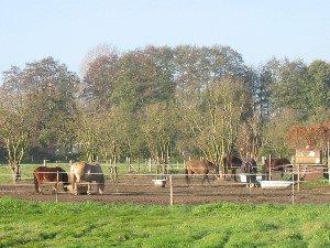 Pferde im Paddock